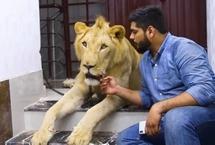 巴基斯坦兄弟饲养雄狮带其驾车出游来自巴基斯坦卡拉奇的两兄弟哈姆撒·侯赛因(Hamzah)和哈桑·侯赛因(Hassan Hussain)有着一位非传统室友:一头名叫辛巴(Simba)的成年非洲雄狮。这对热爱动物的兄弟甚至还开车带辛巴一起旅行。【详细】国际新闻|国际热图