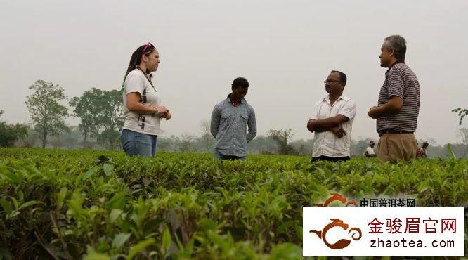 2018国际茶叶市场趋势:直接贸易之死?