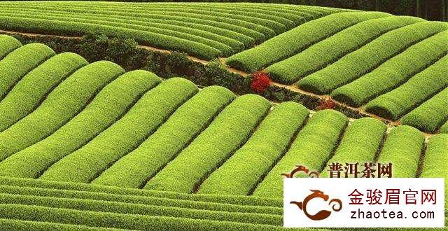斋月即将结束,肯尼亚茶叶价格有望回升