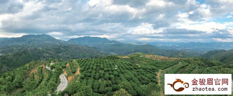 张天福生态茶场:愿开千亩荒山 奉你一叶有机茶