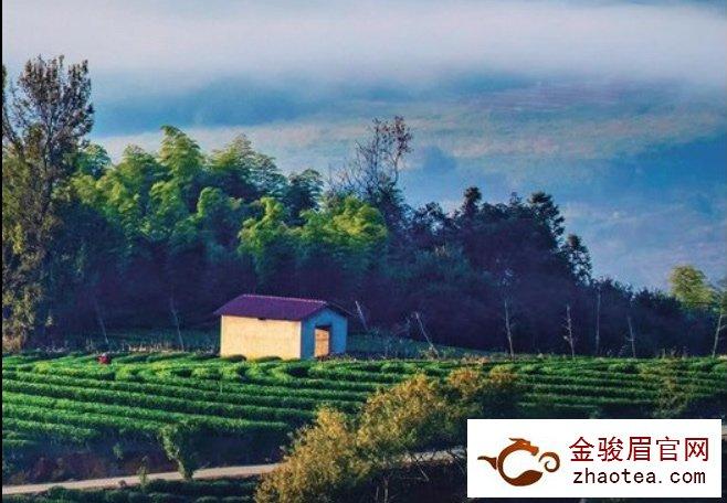 寻访福建最美茶乡第二季之——湛卢茶乡松溪
