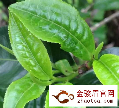 汉中茶叶批发:品饮普洱茶茶汤入口的感受
